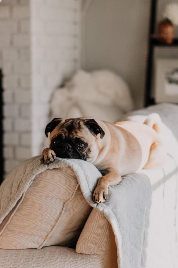 cute dog adopting